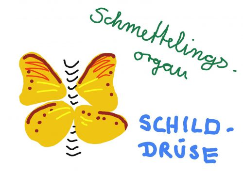 Apotheke am Herrfurthplatz Schmetterlingsorgan Schilddrüse